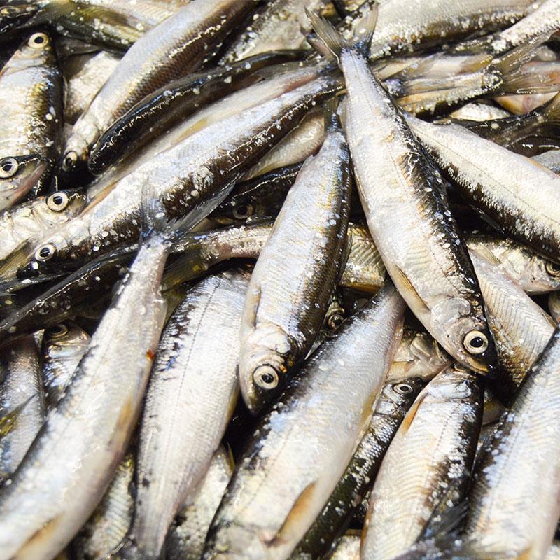 Kuopion kauppahalli kalakauppa